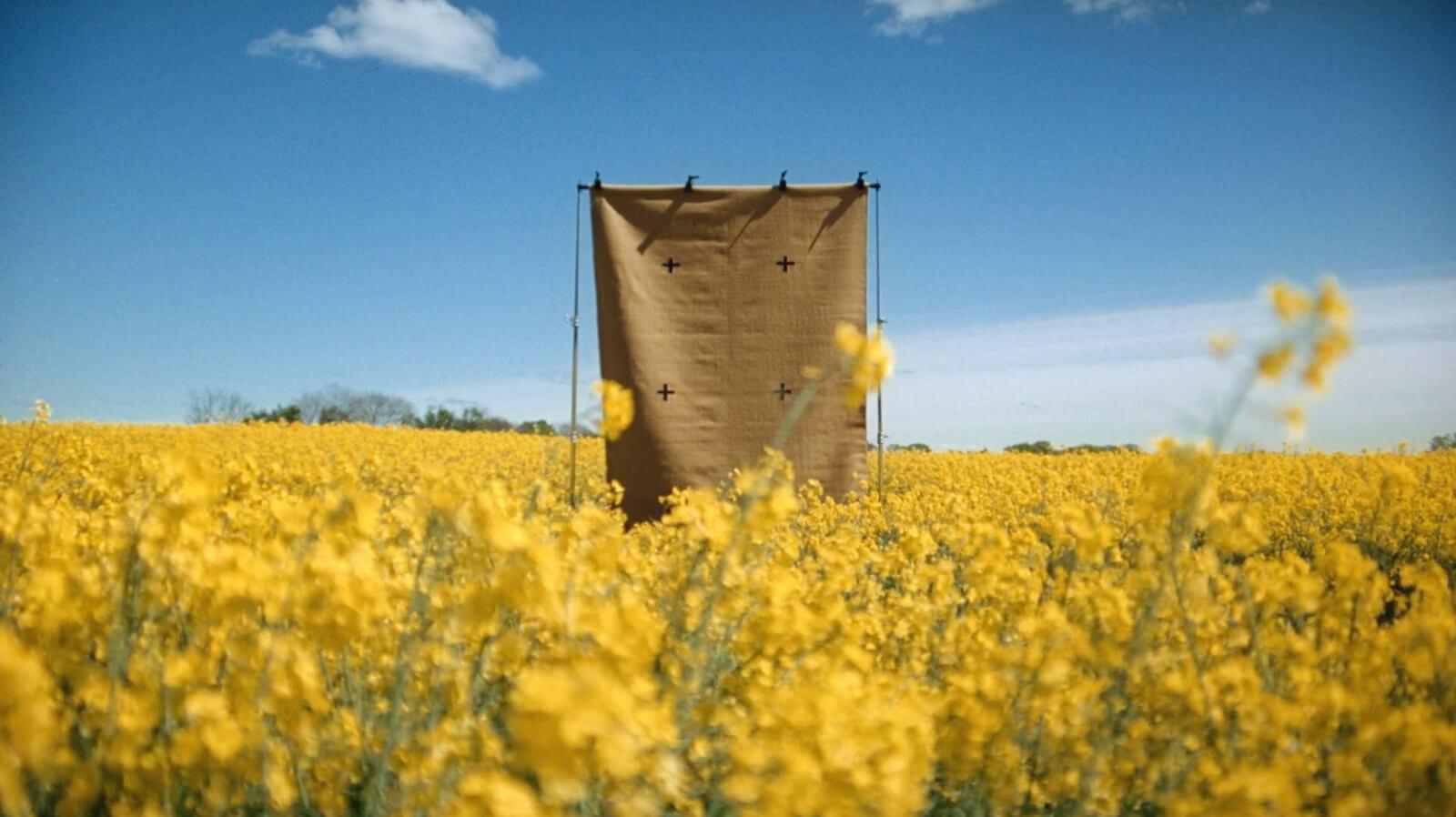 Plus-Mustard-Field